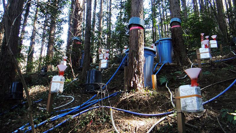 <写真説明> 調査森林における林内雨の観測システム
