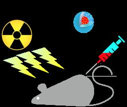 ナノメディシンマウス投与イメージ